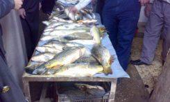 أسماك عشوائية المصادر ولجنة خاصة للمراقبة