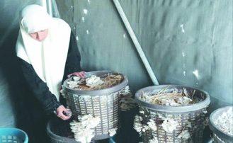 المرأة السورية في سنوات الحرب العجاف..  معاناة من العنف والإرهاب وإرادة النجاح تقهر التحديات