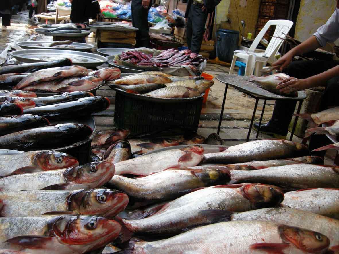 إعداد دراسة المشروع الوطني لمزارع الأسماك الأسرية