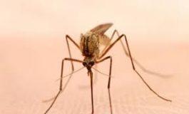 هجوم الحشرات وخط البلدية مشغول