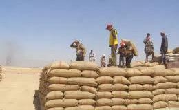 """حسابات البيدر مخيّبة لآمال الفلاح.. وبطء تسويق القمح يكشف """"عورة"""" قرارات الجهات المعنية"""
