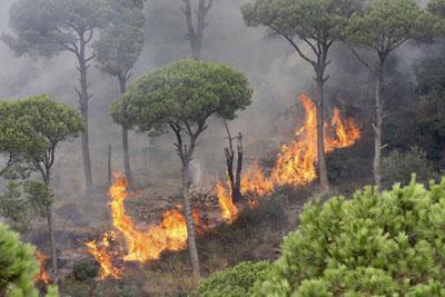 الحرائق تطال عشرات الآلاف من الدونمات الحراجية في حماة.. والمساءلة تسجل ضد مجهول!