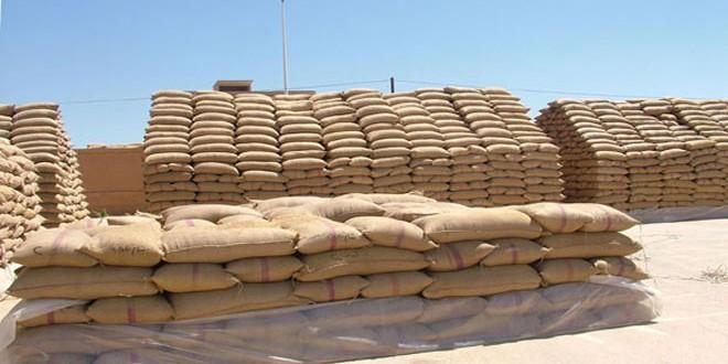 2716 طناً كميات القمح والشعير المستلمة من فلاحي الحسكة