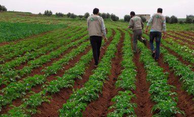 الزراعة الشتوية.. مع قلة الأمطار.. تحضيرات مؤجلة تهدد المحاصيل.. وارتفاع أسعار الأسمدة يزيد التحديات