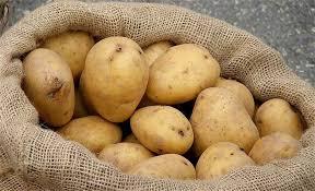 الاكتتاب على بذار البطاطا