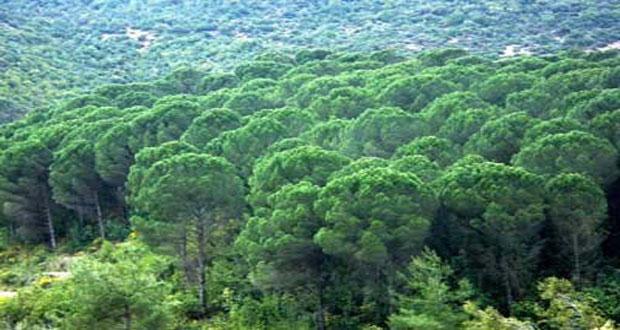 تفاوت أضرار وخسائر الغابات المحروقة بنار الإرهاب