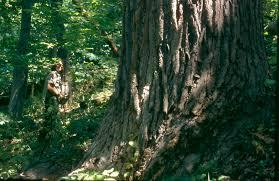 شجرة فقدت ظلها..!!