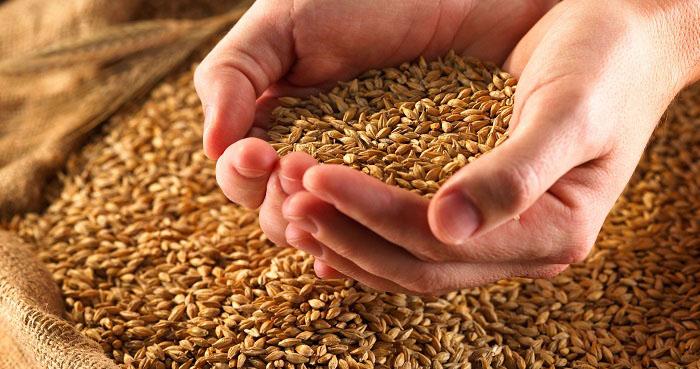 كيف نعيد الغلال إلى البيادر؟  الأمن الغذائي.. بوصلة الاستراتيجية الزراعية.. وتوفير المستلزمات أولى الخطوات
