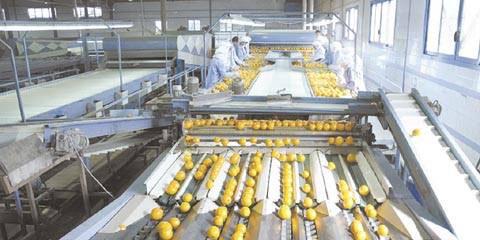 في طريقه إلى الأسواق الخارجية  الإنتاج الزراعي.. يكسب رهان الجودة والثمرة النظيفة ويتعثر في المواصفة التصديرية
