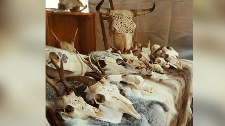 جماجم الحيوانات تتحول إلى تحف فنية