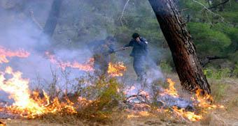 بدلاً من الحريق حريقان في غابات مصياف والمستفيد الوحيد تجار الحطب؟!
