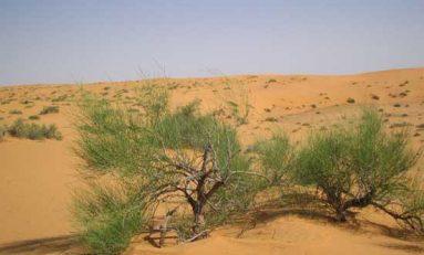 الكثبان الرملية تسللت خلسةً.. والتصحر يهدد الإنتاج الزراعي