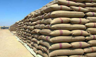استلام محصول القمح من فلاحي حماة حتى الأول من شباط